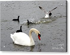 Playful Fun On The Lake Acrylic Print by Kathy  White