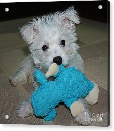 Playful Puppy Acrylic Print by Terri Waters