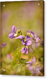 Playful Wild Violets Acrylic Print by Lois Bryan