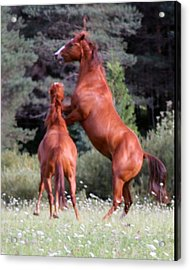 Playing Free Acrylic Print by Rhonda Humphreys