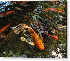 Playing Koi With Me Acrylic Print by Shannon Story