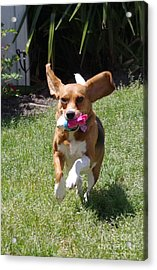 Playtime Acrylic Print by Tannis  Baldwin
