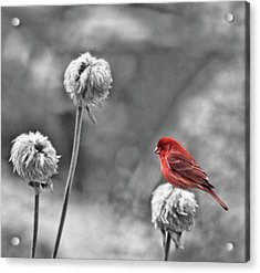 Please God I Need Spring Acrylic Print by Diane Schuster