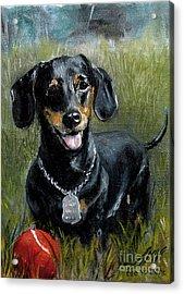 Please Throw The Ball Acrylic Print by Stella Violano