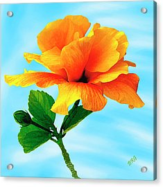 Pleasure - Yellow Double Hibiscus Acrylic Print by Ben and Raisa Gertsberg