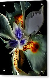 Pleatleaf Flower Acrylic Print