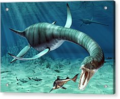 Plesiosaur Attack Acrylic Print