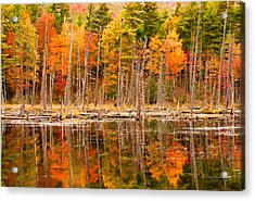 Plethora Of Fall Colors Acrylic Print