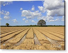 Ploughed Field Acrylic Print