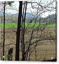 Plowed Acrylic Print by Catherine Arcolio