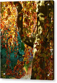 Plucking The Rainbow Acrylic Print by Connie Handscomb