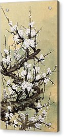 Plum Blossom Acrylic Print by Vii-photo