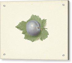 Plum On A Leaf, Elisabeth Geertruida Van De Kasteele Acrylic Print