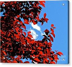 Plum Tree Cloudy Blue Sky 1 Acrylic Print by CML Brown