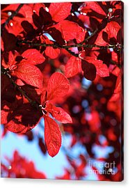 Acrylic Print featuring the photograph Plum Tree Cloudy Blue Sky 2 by CML Brown