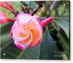 Acrylic Print featuring the photograph Plumeria Curve by Kristine Merc
