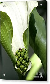 Pocket Of Foliage Acrylic Print by Laura Paine