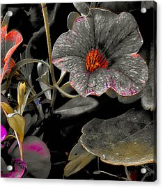 Acrylic Print featuring the photograph Pocket Of Orange by Thom Zehrfeld