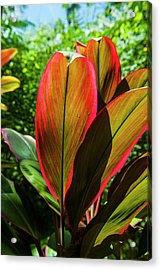 Pohnpei, Micronesia, Central Pacific Acrylic Print