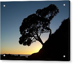 Pohutukawa Trees At Sunrise Acrylic Print by Peter Mooyman