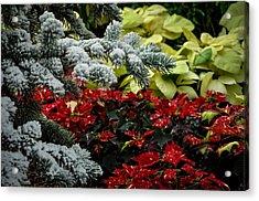 Poinsettia Garden Acrylic Print