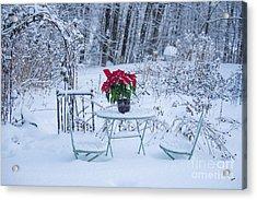 Poinsettia In The Snow Acrylic Print by Alana Ranney