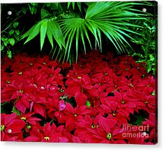Acrylic Print featuring the photograph Poinsettias And Palm by Tom Brickhouse