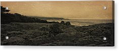 Point Lobos - An Antique Take Acrylic Print by Angela A Stanton
