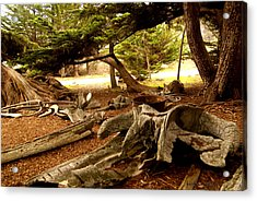 Point Lobos Whalers Cove Whale Bones Acrylic Print by Barbara Snyder