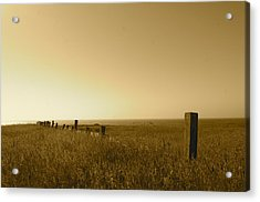 Point Reyes Field Acrylic Print by Colleen Renshaw