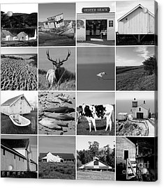 Point Reyes National Seashore 20150102 Black And White Acrylic Print by Wingsdomain Art and Photography