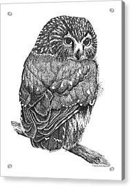 Pointillism Sawhet Owl Acrylic Print by Renee Forth-Fukumoto
