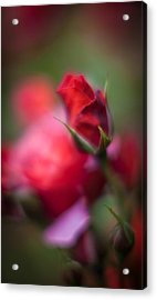 Points Acrylic Print by Mike Reid