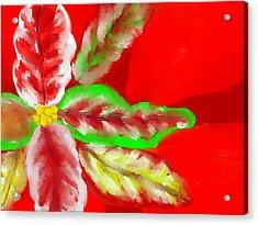 Pointsettia Acrylic Print by Doris Culverhouse