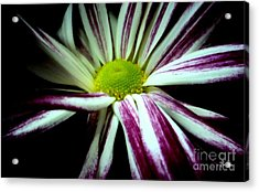 Poised Acrylic Print