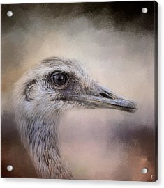 Poised - Ostrich - Wildlife Acrylic Print