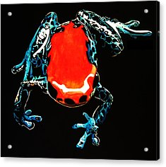 Poison Dart Frog Acrylic Print by Mike Durco