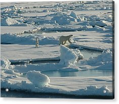 Polar Bear And Her Cub Acrylic Print by Kelley Elliott