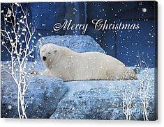 Polar Bear Christmas Greeting Acrylic Print by Elaine Manley