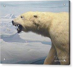 Polar Bear Diorama Acrylic Print