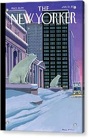 Polar Bears Sit Outside The New York Public Acrylic Print by Bruce McCall
