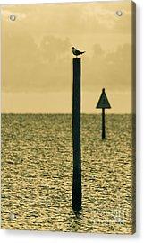 Pole Position Acrylic Print