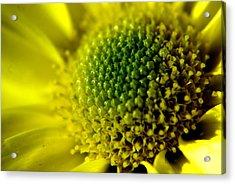 Pollen Factory Acrylic Print