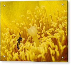 Acrylic Print featuring the photograph Pollen Forest by Len Romanick