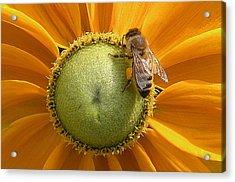 Pollen Time Acrylic Print