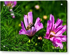 Pollinating Flowering Acrylic Print
