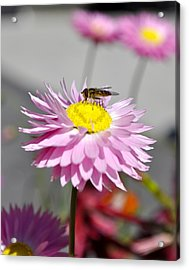 Acrylic Print featuring the photograph Pollination by Cathy Mahnke