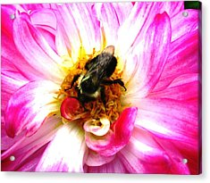 Pollination Nation 2 Acrylic Print by Will Boutin Photos