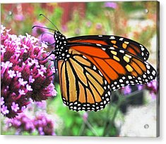Pollination Nation 3 Acrylic Print by Will Boutin Photos