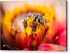 Acrylic Print featuring the photograph Pollination by Priya Ghose